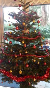 frisch geschlagener Weihnachtsbaum